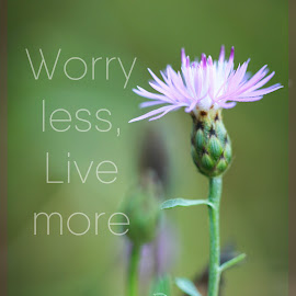 Live not Worry by Tammy Drombolis - Typography Captioned Photos ( serenity, quote, green, peace, knapweed, flower )