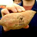 """Os produtores resolveram trocar aqueles adesivos que vem em frutas e produtos hortícolas pelo chamado """"natural branding"""" de alta tecnologia."""
