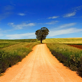 Road To Nowhere by Phillip Minnis - Landscapes Prairies, Meadows & Fields ( tree, road, rural, lane, fields )