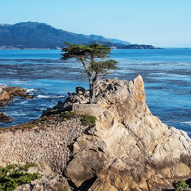Lone Cypress by Mark Wirzburger - Landscapes Travel ( monterey, california coastline, cypress tree, seascape, landscape, lone cypress )