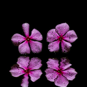 Twin Pinks by DrArindam Ghosh - Nature Up Close Flowers - 2011-2013 ( pink flowers, pink, wet, flowers, wet flowers )