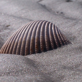 Shell by Angel Harvey - Novices Only Macro ( shell, sand, beach )