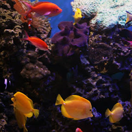 Under The Reef by Cassie Karanasos - Animals Fish ( zoo, zoo photography, fish, aquarium, fishes )