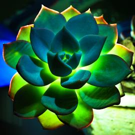 Light Behind Petals by Gunawan Wijaya - Nature Up Close Other plants ( light, flower )