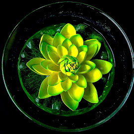Lotus in glass by Asif Bora - Instagram & Mobile Other (  )