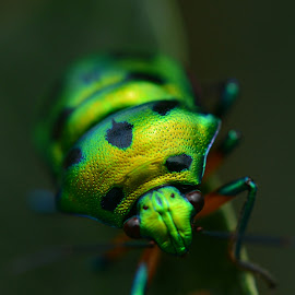 Insect by Andrews Mathew - Animals Insects & Spiders ( insects, photography )