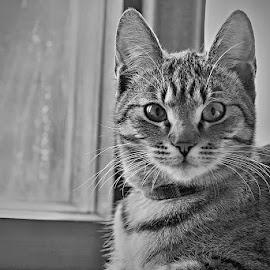+++ by Katka Kozáková - Animals - Cats Portraits ( cat, black and white )