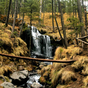by Cristobal Garciaferro Rubio - Landscapes Forests ( water, pines, waterfall, fores, trees )