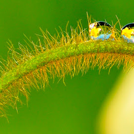 by Dida Melana - Nature Up Close Leaves & Grasses