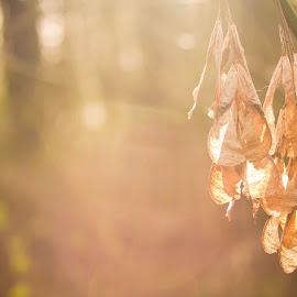 серьги by Inna Leusik - Nature Up Close Leaves & Grasses ( лес, закат, природа, осень, серьги )