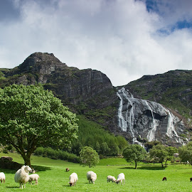 Summer in Gleninchaquin by Judy Mulholland - Landscapes Prairies, Meadows & Fields ( kerry beara kenmare ireland sheep waterfall )