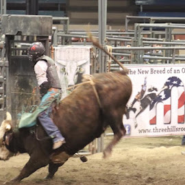 rodeo by Shelley Deeds - Sports & Fitness Rodeo/Bull Riding