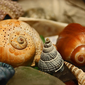 Shell Collection by Jeannine Jones - Artistic Objects Still Life