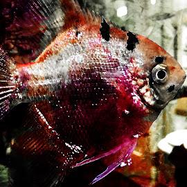 by Austin Lubetkin - Digital Art Animals