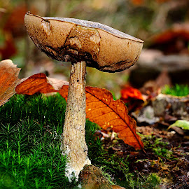 Fall color by Gérard CHATENET - Nature Up Close Mushrooms & Fungi