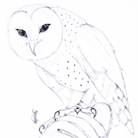 Owl by Jo Soule - Drawing All Drawing ( owl,  )