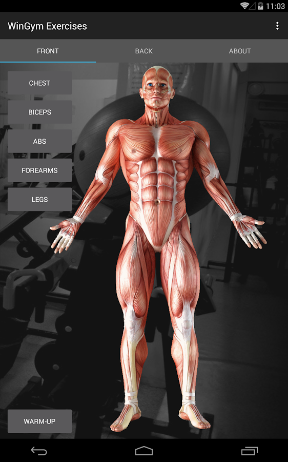 WinGym Exercises Premium Screenshot 8