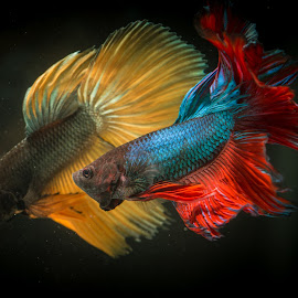 My Couple Fish by Eeezam Mon - Animals Fish