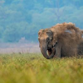 Sand Bath by Ganesh Namasivayam - Animals Other Mammals ( corbett tiger reserve, pachyderms, indian elephant, asian elephant, uttarakhand, sand bath )