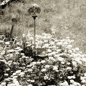 Black and White Garden by Sara Swanson - Nature Up Close Gardens & Produce