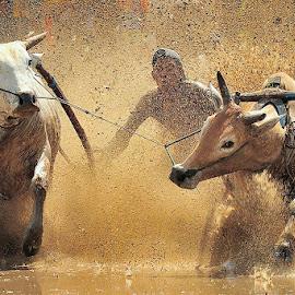 bull race by Dadan Ramdani - Sports & Fitness Rodeo/Bull Riding