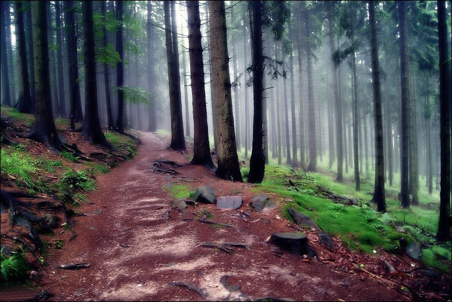 Miedzygorze by Marta Bednarska - Landscapes Forests
