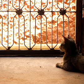 Waiting  by Bhavishya Yadav - Animals - Cats Kittens ( silent, home, cat, summer, wait )