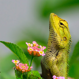 by Arup Das - Animals Reptiles