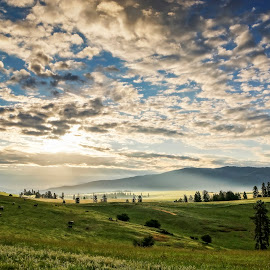 Sunrays on the Meadow by Evan Jones - Landscapes Prairies, Meadows & Fields ( clouds, idaho, mountains, meadow, sunrise, cows, sun rays, green grass, camas prairie )