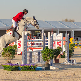 Ready For The Leap by Ansari Joshi - Sports & Fitness Other Sports ( shutter priority mode, equesterian, horse, sports, fast shutter speed, show, horseback, emirates equestrian club, fast action, dubai, freezing action, uae, outdoor, show jumping, thoroughbred, stables )