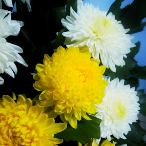 White and yellow by Adoracion Bautista - Uncategorized All Uncategorized ( bouquet, white flowers, flowers, yellow flower,  )