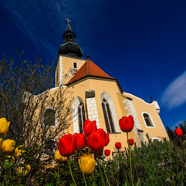 Tulips At the Church from Grossschönau by Franz  Adolf - Buildings & Architecture Places of Worship ( church, tulips, flowers )