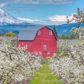 Hood River Old Red Barn by Chris Bartell - Buildings & Architecture Other Exteriors ( 2017, oregon, april, landscape )