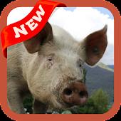 App Pig Wallpaper APK for Kindle