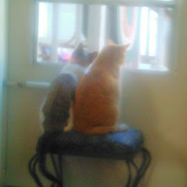 Cats in window  by Debra Rebro - Animals - Cats Portraits