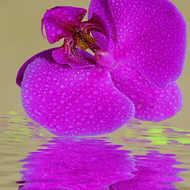 Reflet d'orchidée by Gérard CHATENET - Digital Art Things