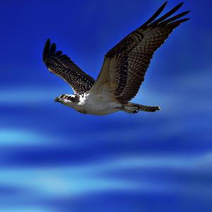 BLUE BIRD DONE.jpg