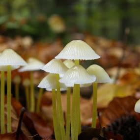 mushrooms by Lidija P - Nature Up Close Mushrooms & Fungi