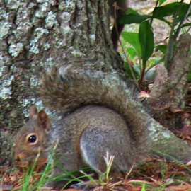 The Squirrel  by Terry Linton - Animals Other (  )