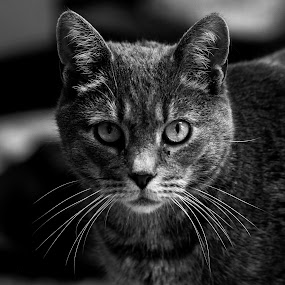 by Forrest Covin - Black & White Animals