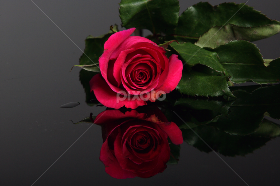 Red Rose by Cristobal Garciaferro Rubio - Nature Up Close Flowers - 2011-2013 ( rose, reflection, red, red rose, reflections, leaf, flowers, leaves, flower )