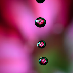 Drops of life by Gustavo Cabral - Nature Up Close Flowers - 2011-2013 ( plant, detail, single, colorful, drop, dew, beauty, leaf, vibrant, spring, sun, blossom, macro, nature, fresh, pink, wet, flower, closeup, rain, petal, water, abstract, flora, texture, green, beautiful, bloom, morning, close-up, red, liquid, season, color, background, drops, summer, freshness, stem, garden, natural )