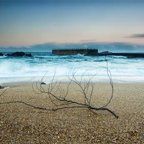 Sozinho by Pedro Ribeiro - Landscapes Waterscapes