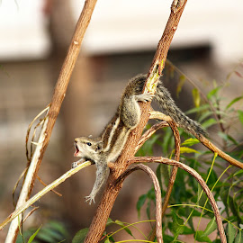 Squirrel's Morning by Manish Upadhyay - Animals Other ( nature, morning, landscape, squirrel, animal )