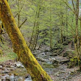 by Nikola Ikić - Nature Up Close Trees & Bushes