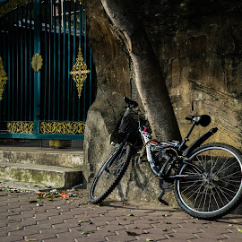 Bicycle by Varok Saurfang - Transportation Bicycles ( trunk, park, tree, street, gate, bicycle )