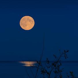 Moon over Albert Beach by Dave Lipchen - Landscapes Beaches ( moon, albert beach, beach,  )