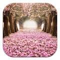 Cherry Blossom Live Wallpapers APK baixar