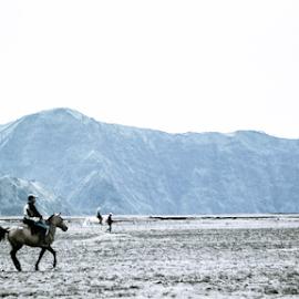 Tengger Tribe Horseman by Alif Ahmada - People Street & Candids ( horse, tengger, sand, btomo, horseman )