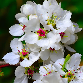 Spring Blooms by Patricia Warren - Flowers Tree Blossoms ( wildflowers, spring colorful flowers, nature, blooms, petals, trees, leaf, flowers, landscape, leaves, spring, garden, blossoms,  )